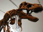 dinosaur_sentinel